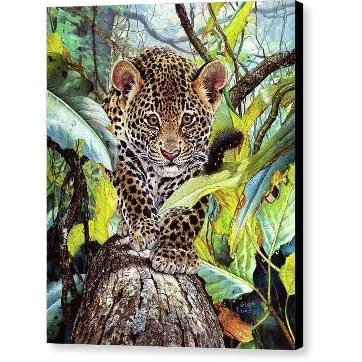 Jaguar Cub - Canvas Print by Glen Loates from the Glen Loates Store