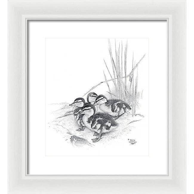 Mallard Ducklings - Framed Print