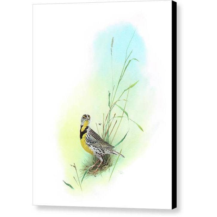 Meadow Lark - Canvas Print | The Official Glen Loates Store