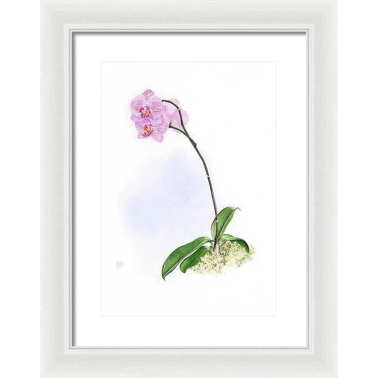 Orchid - Framed Print | The Official Glen Loates Store