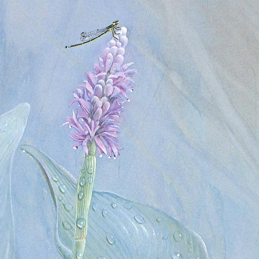 Pickerelweed - Canvas Print by Glen Loates from the Glen Loates Store