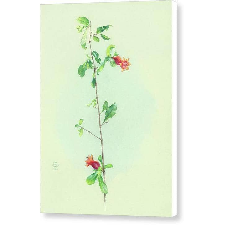 Pomegranate - Canvas Print | The Official Glen Loates Store