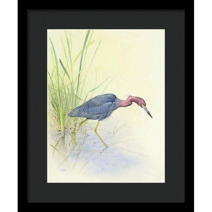 Purple Heron - Framed Print by Glen Loates from the Glen Loates Store