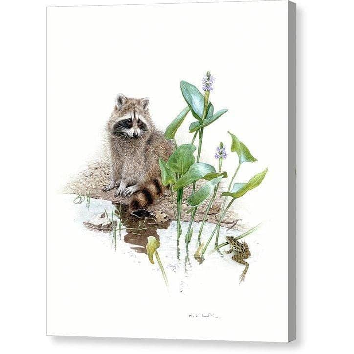 Raccoon Baby - Canvas Print by Glen Loates from the Glen Loates Store