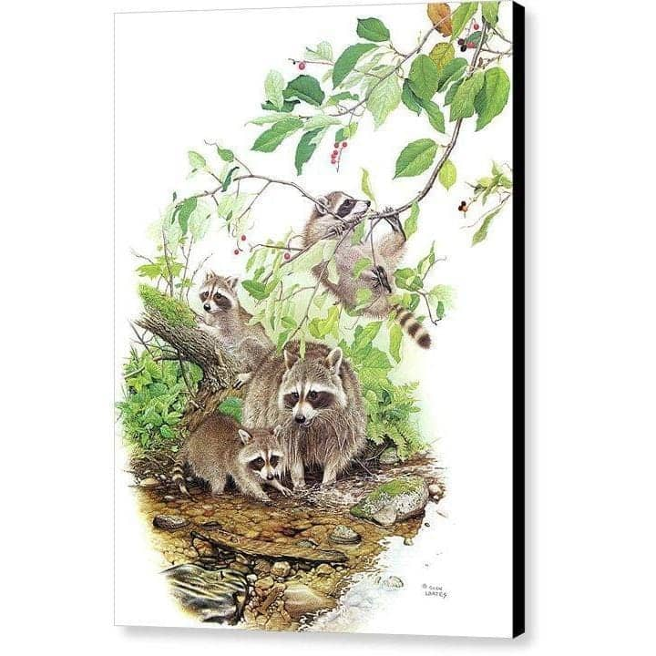 Raccoon Family - Canvas Print by Glen Loates from the Glen Loates Store
