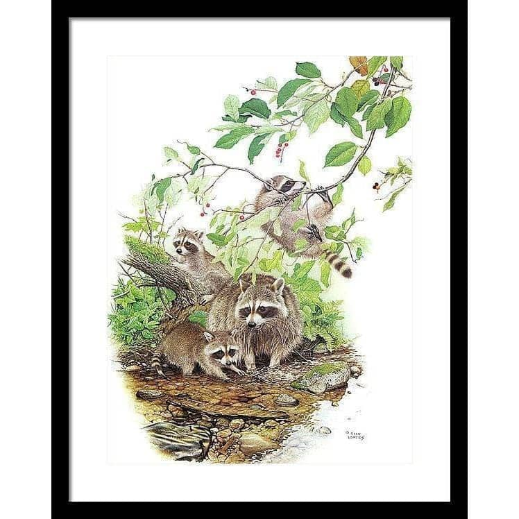 Raccoon Family - Framed Print-Framed Print-The Official Glen Loates Store