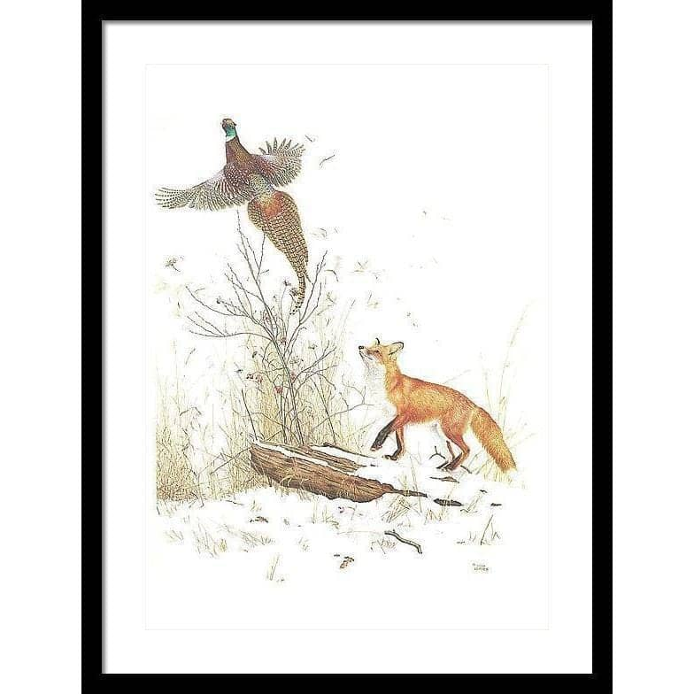 Red Fox and Ring-necked Pheasant - Framed Print by Glen Loates from the Glen Loates Store