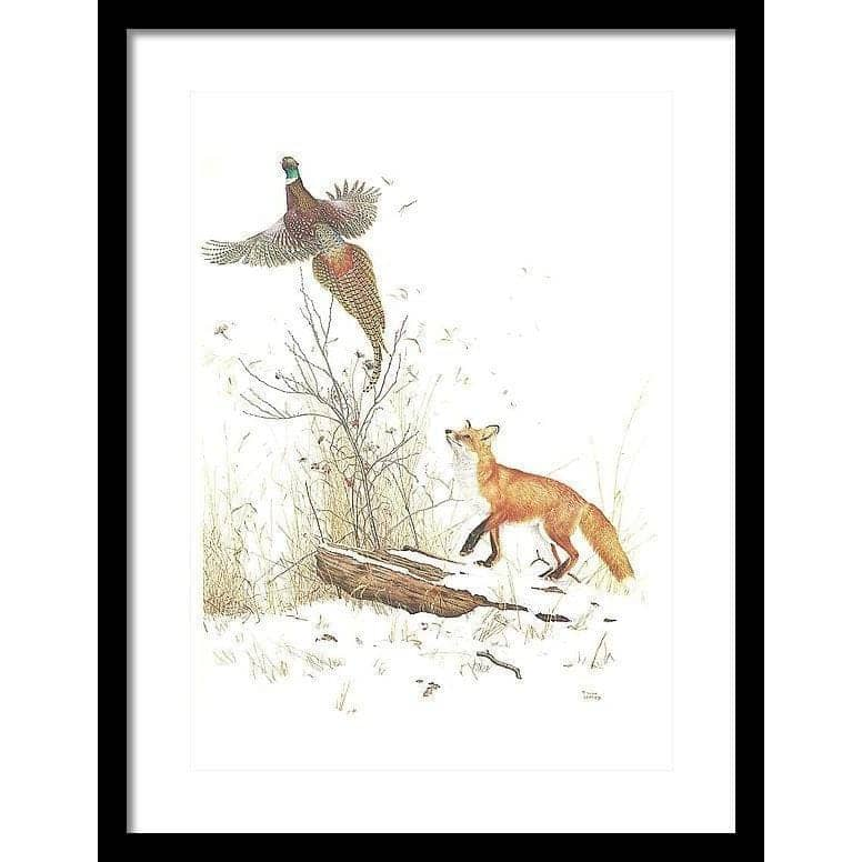 Red Fox and Ring-necked Pheasant - Framed Print-Framed Print-The Official Glen Loates Store