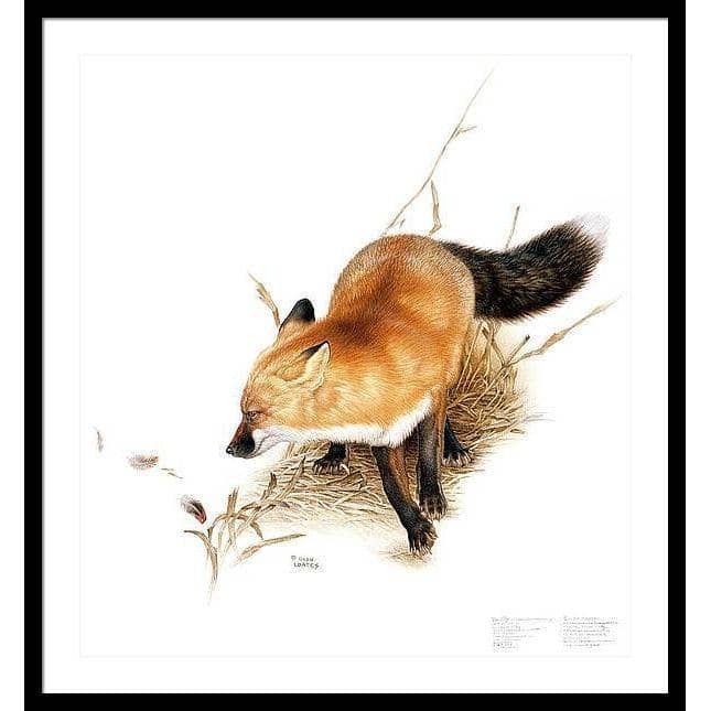 Red Fox - Framed Print | The Official Glen Loates Store