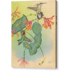 Ruby-throated Hummingbirds with Trumpet Flower - Canvas Print