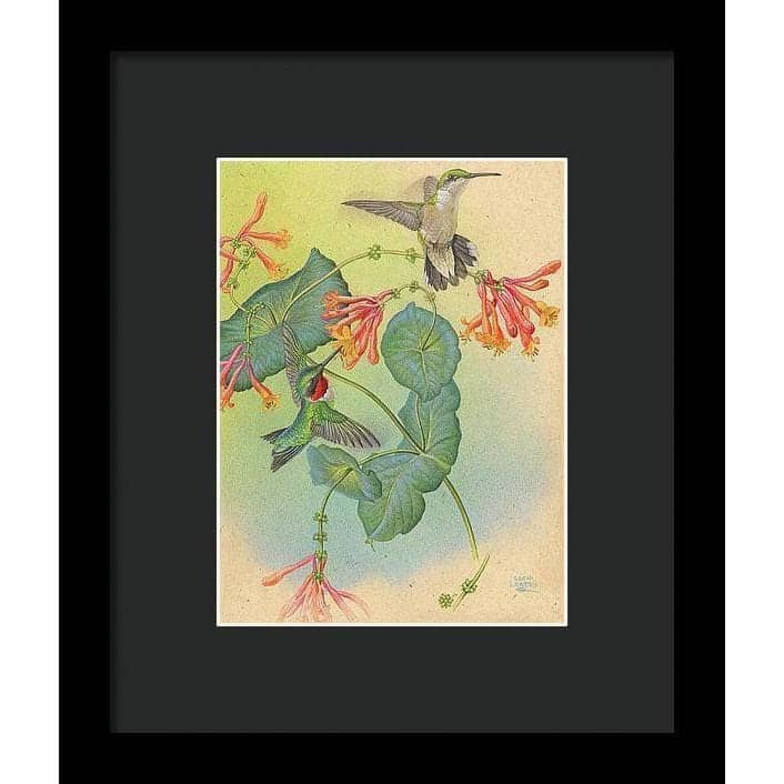 Ruby-throated Hummingbirds with Trumpet Flower - Framed Print - The Official Glen Loates Store