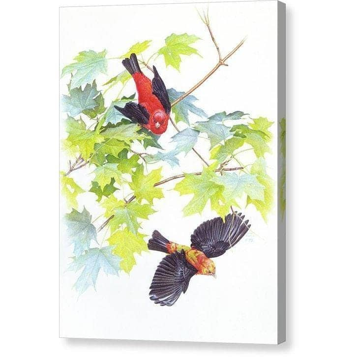 Scarlet Tanagers - Canvas Print by Glen Loates from the Glen Loates Store