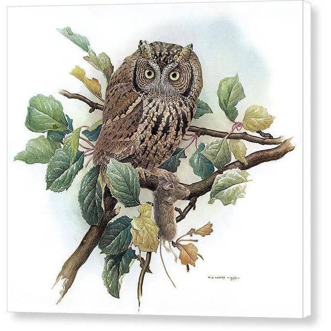 Screech Owl with Field Mouse - Canvas Print