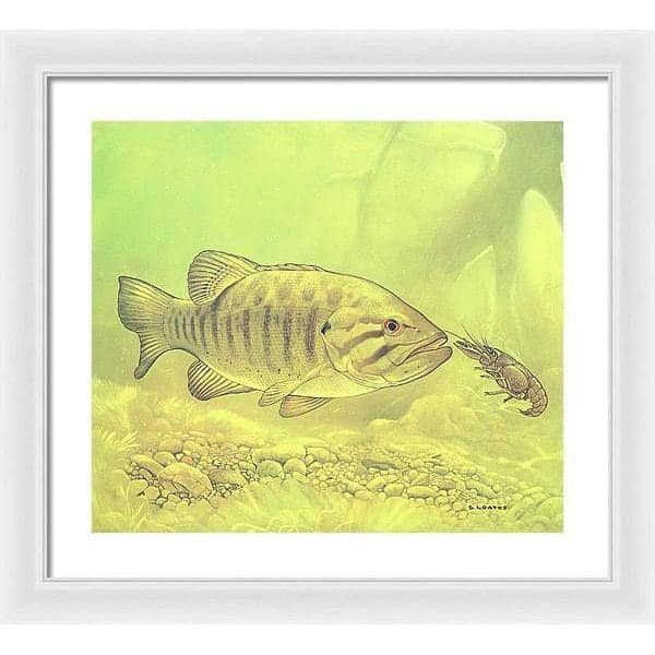 Small Mouth Bass Pursuing Crayfish - Framed Print by Glen Loates from the Glen Loates Store