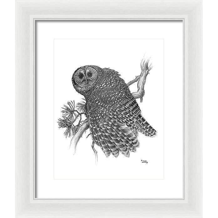 Spotted Owl - Framed Print