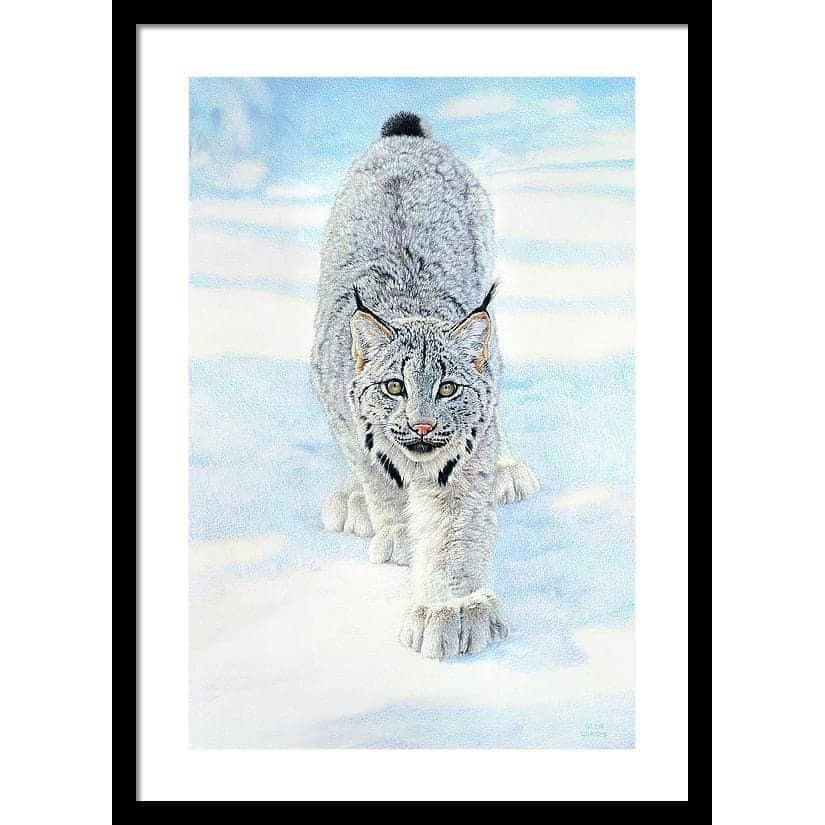 Stalking Lynx - Framed Print by Glen Loates from the Glen Loates Store