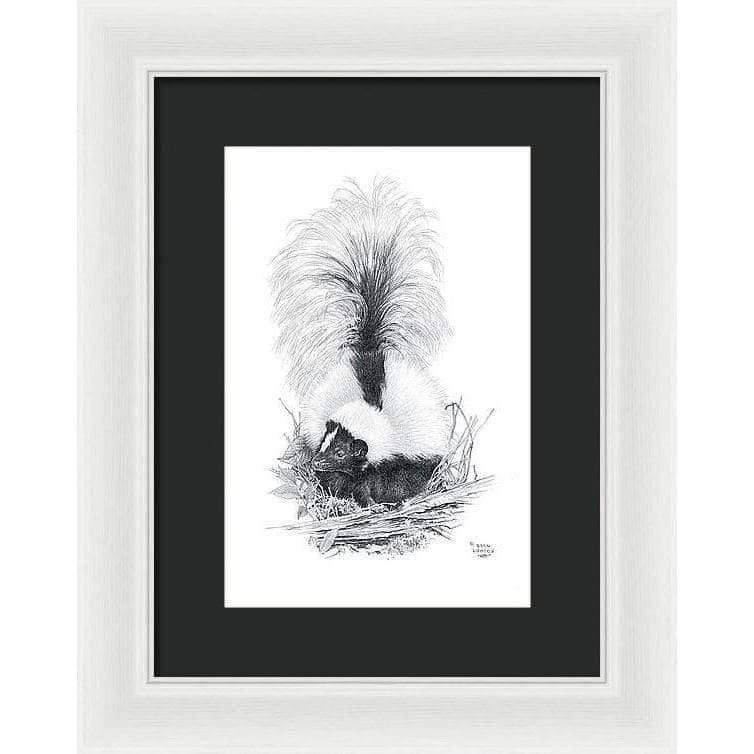 Striped Skunk - Framed Print