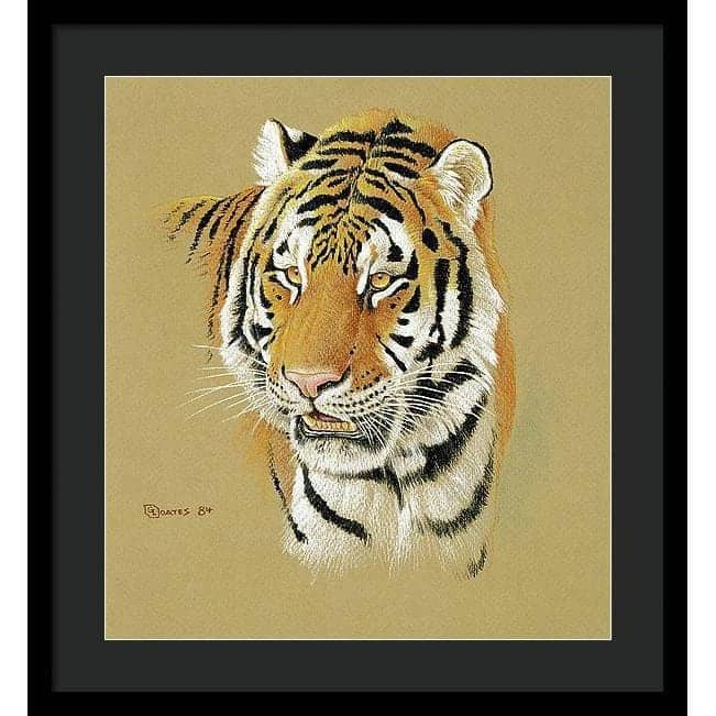Tiger Portrait - Framed Print by Glen Loates from the Glen Loates Store