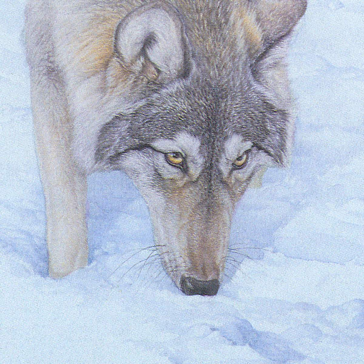 Tracking The Scent - Art Print by Glen Loates from the Glen Loates Store