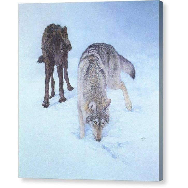 Tracking The Scent - Canvas Print by Glen Loates from the Glen Loates Store