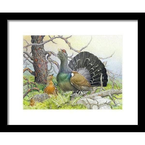 Western Capercaillie - Framed Print by Glen Loates from the Glen Loates Store