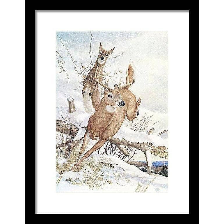 White-tailed Deer - Framed Print-Framed Print-The Official Glen Loates Store