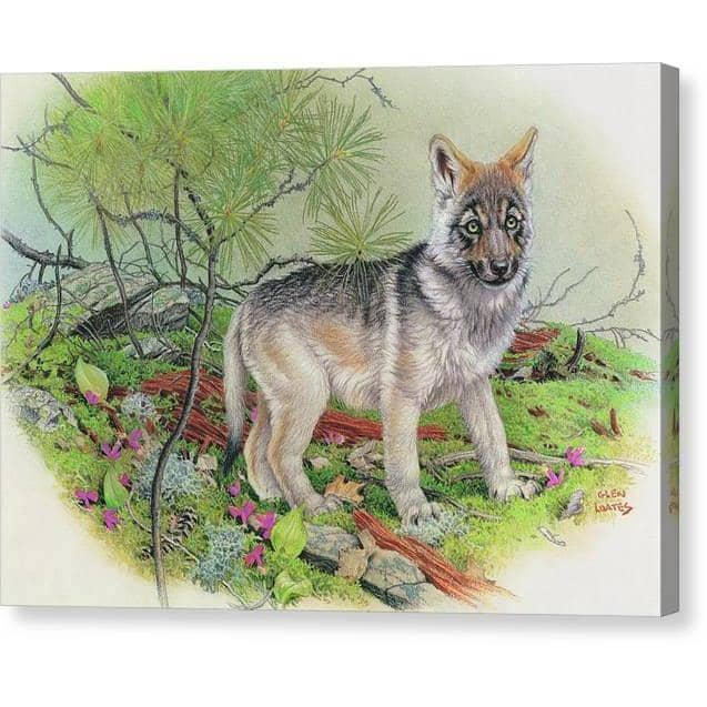 Wolf Pup - Canvas Print | The Official Glen Loates Store