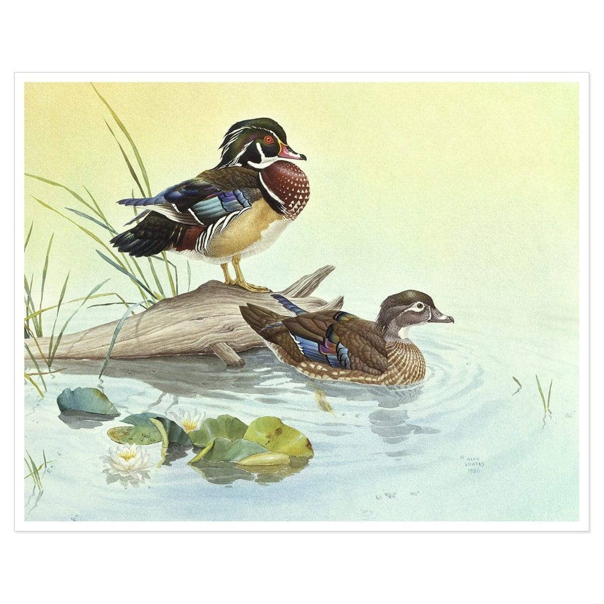 Wood Ducks - Art Print by Glen Loates from the Glen Loates Store