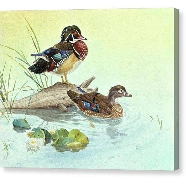 Wood Ducks - Canvas Print by Glen Loates from the Glen Loates Store