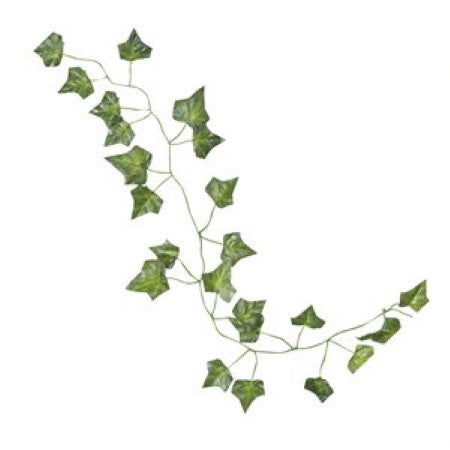Close up of Decorative Vines showing ivy leaves hanging I UK