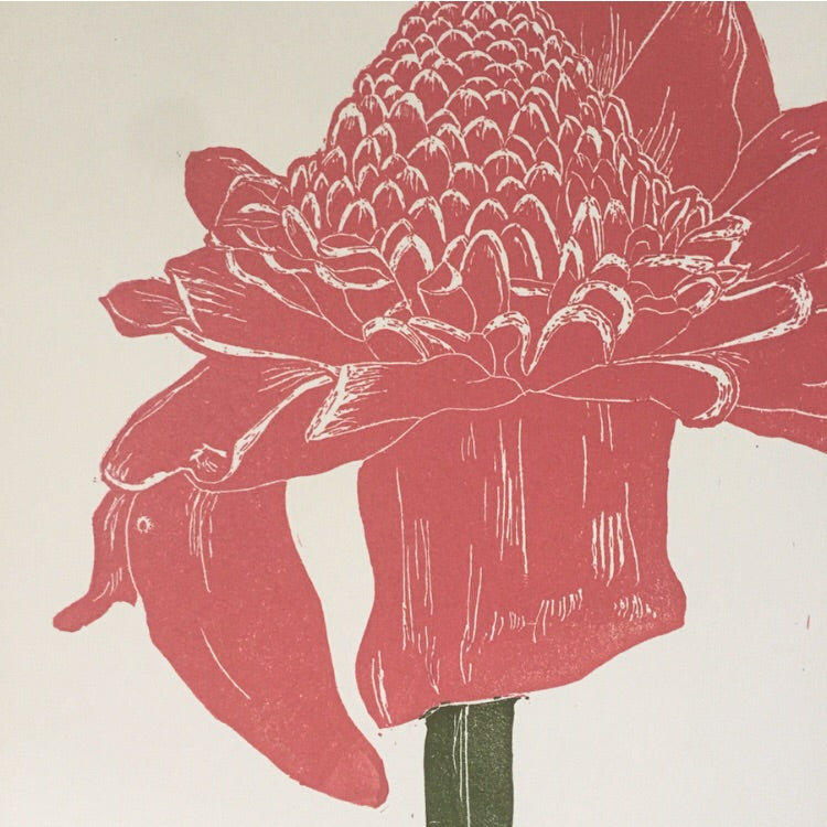 Torch Ginger - Color on Cream 11x14