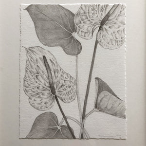 Anthurium-  Gallery Quality Giclee
