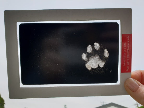Paw Prints with the No Mess Ink Pad