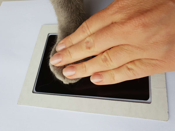 Pet Paw Printing Tips with No Mess Ink Pads