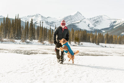 10 Essentials for Winter Hiking with Your Dog