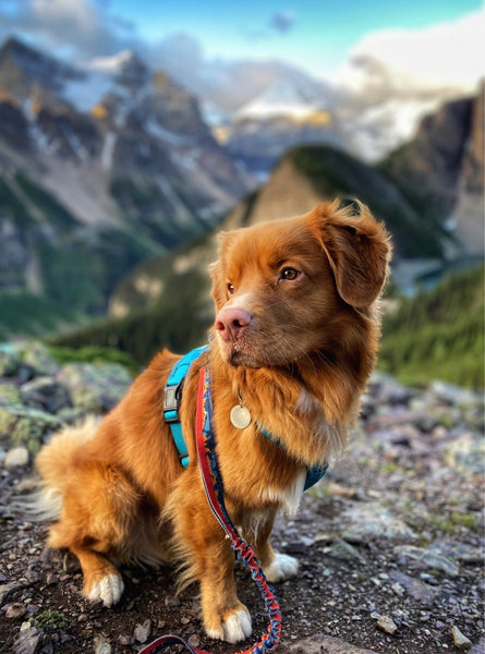 butch dog little beehive lake louise
