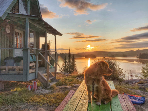 duck toller dog at sunrise with cabin and at oyama lake british columbia
