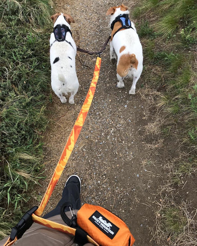 Rocky Mountain Dog leash with two jack russells