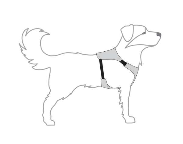 image of harness on a dog