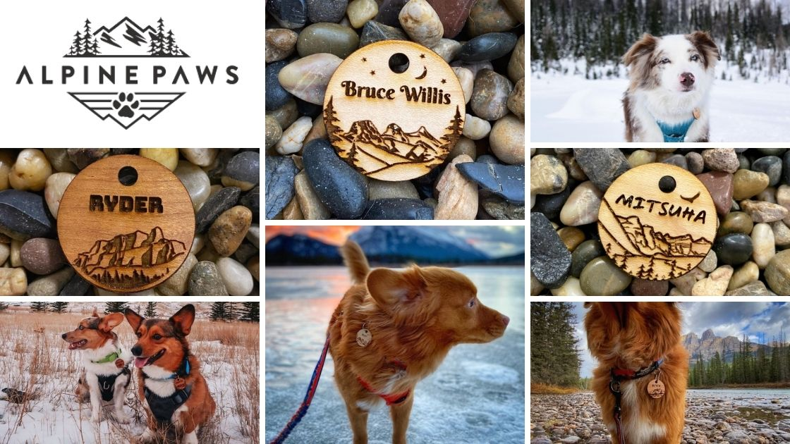 alpine paws pet id tags
