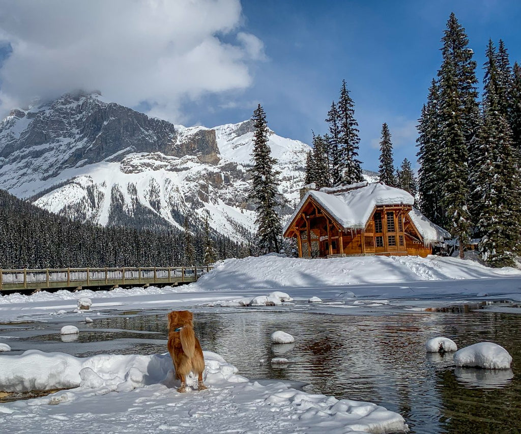 duck toller dog at emerald lake lodge with bridge in the background