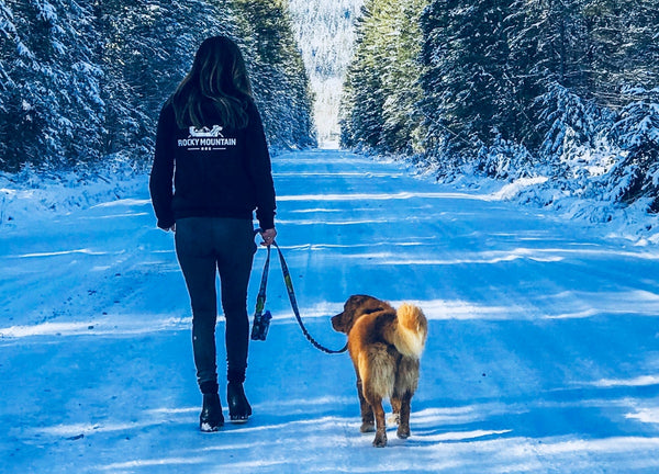walking dog on a snowy road