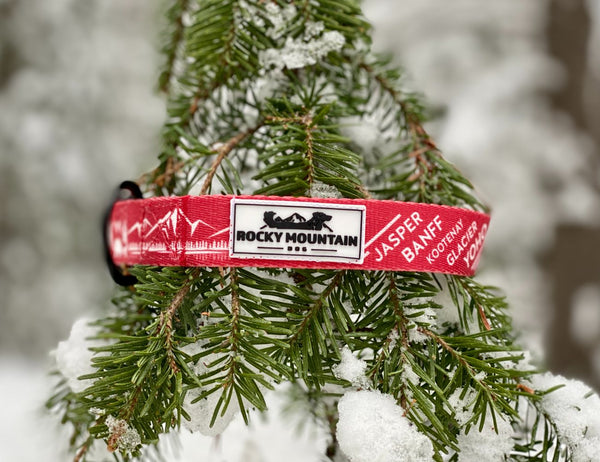 park series dog collar by rocky mountain dog