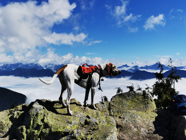 mount seymour hike with dog