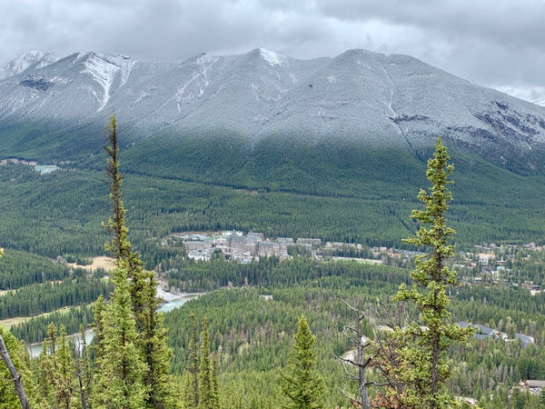 looking at banff springs hotel from tunnel mountain trail