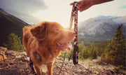 grizzly rundle all-mountain dog leash