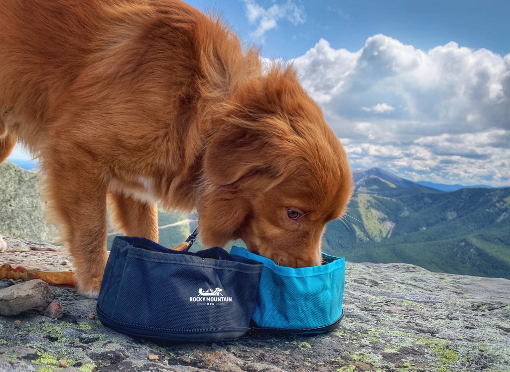 Duck toller dog eating out of the RMD dog travel bowl