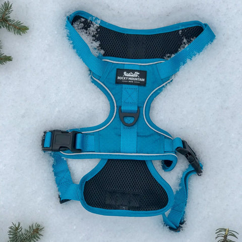 blue dog harness back view
