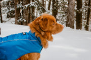 duck toller dog wearing the rocky mountain dog coat jacket in blue