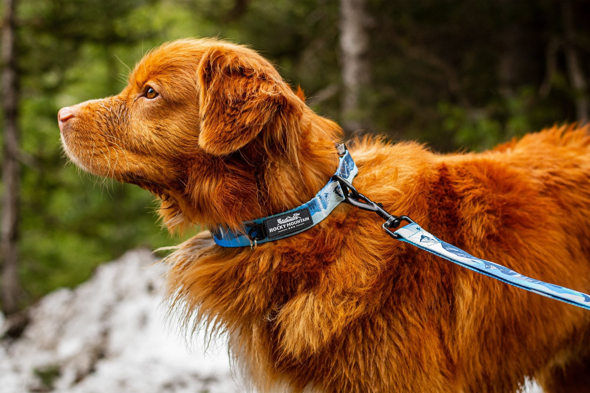 Kootenay Alpine Dog Collar
